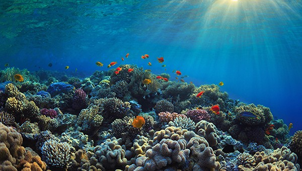 Springer World Oceans Day 600x340 © Springer Nature 2020