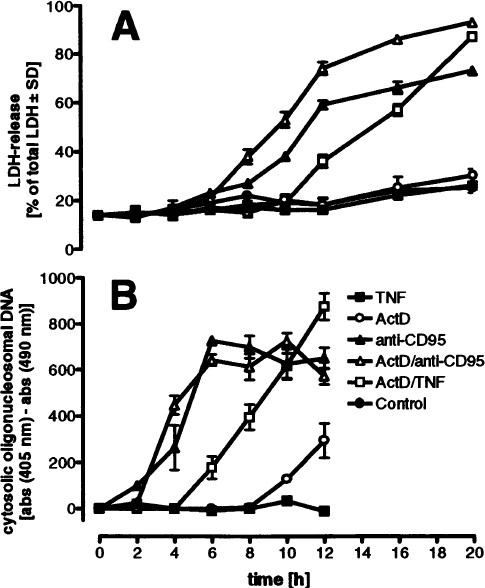 The 55 Kd Tumor Necrosis Factor Receptor And Cd95 Independently
