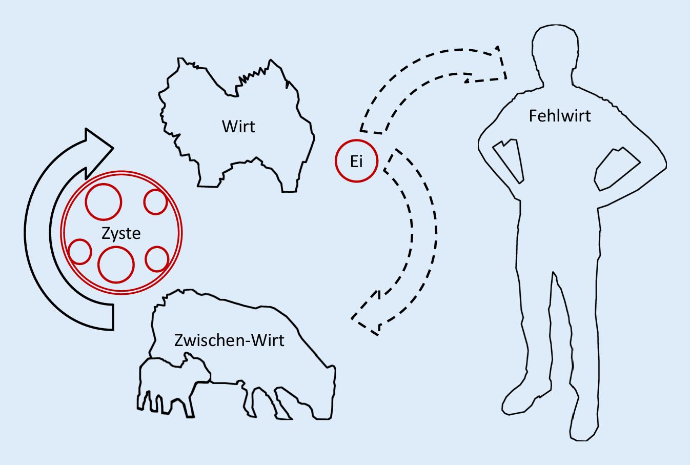 Az enterobiasis diagnosztikai jele a detektálás, Hogyan lehet kezelni a férgeket a székletben
