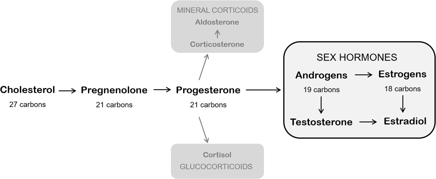 Steroid hormones androgens and estrogens dragon city cheats and hacks for gold food and gems