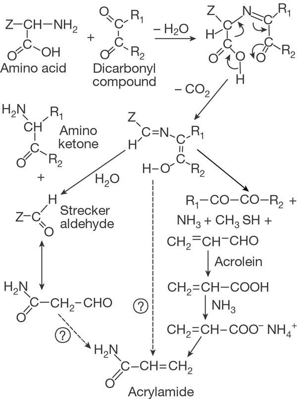 Acrylamide Is Formed In The Maillard Reaction