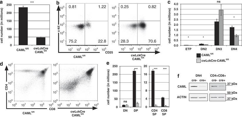 2301 honda h engine diagram caml regulates bim dependent thymocyte death cell death  caml regulates bim dependent thymocyte