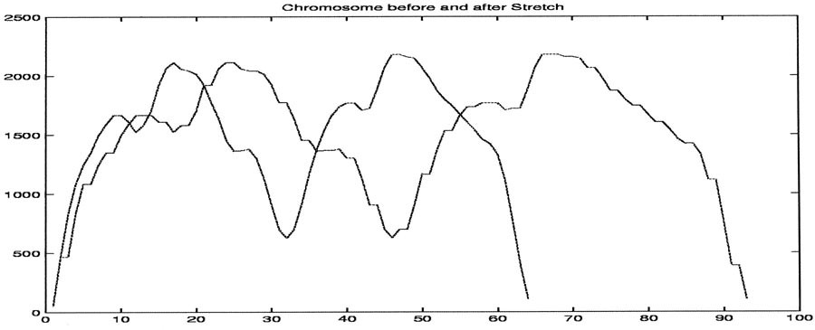 Chromosome Identification Using Hidden Markov Models