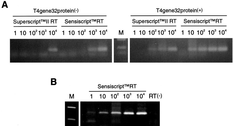 An Optimized Protocol for First Strand cDNA Synthesis from