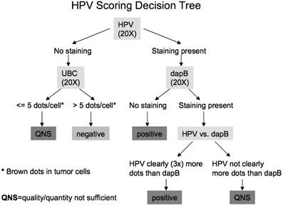 Hpv high risk typing by rna transcription