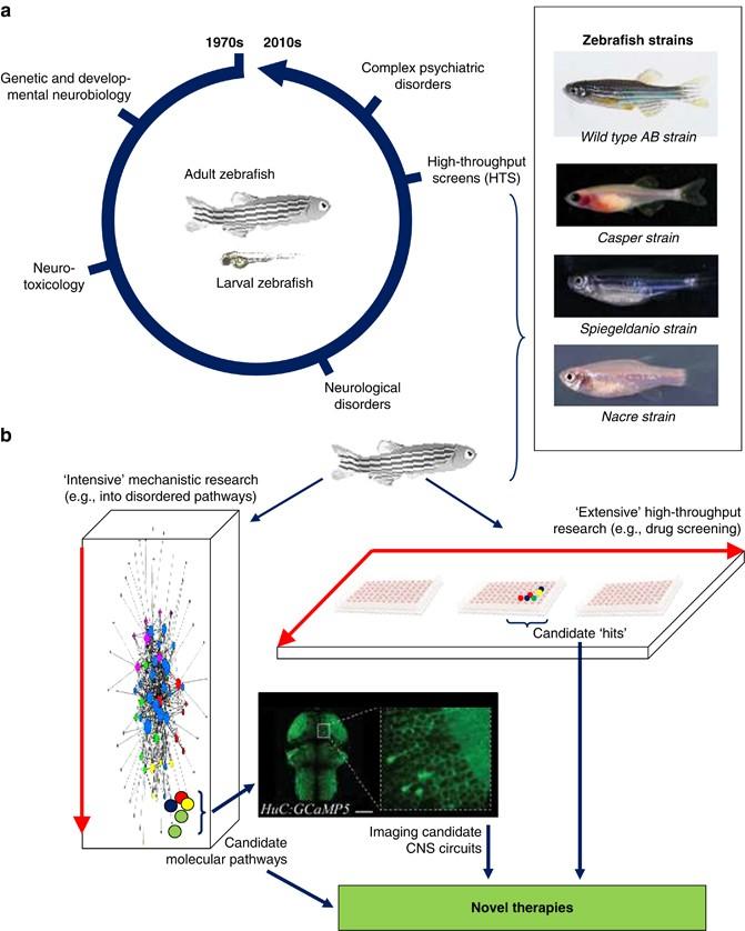 Molecular Psychiatry Of Zebrafish