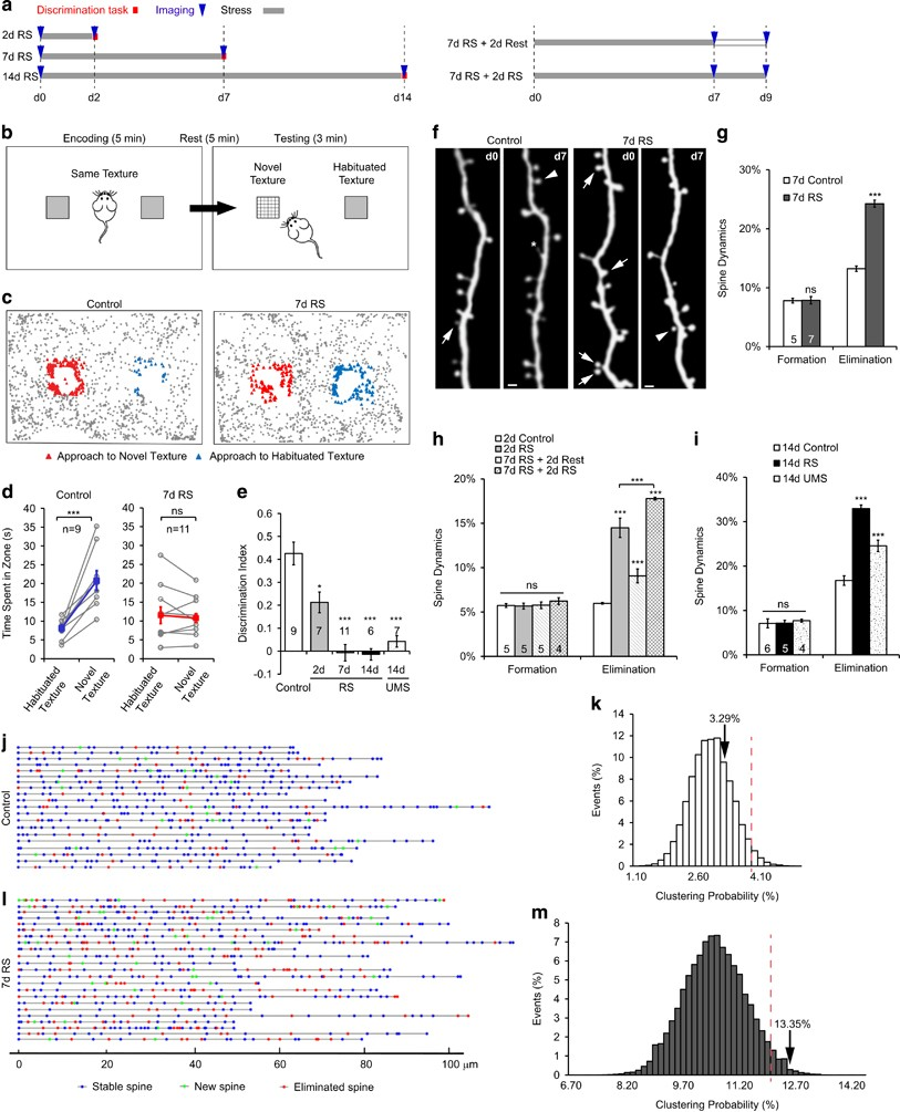 Selective Activation Of Parvalbumin Interneurons Prevents Stress Drum Switch Wiring Diagram On 6 Lead 3 Phase Motor Induced Synapse Loss And Perceptual Defects Molecular Psychiatry