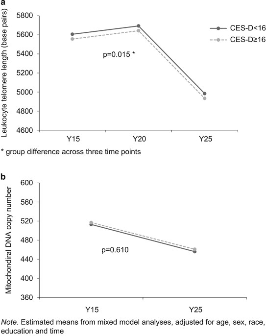 Depression, telomeres and mitochondrial DNA: between- and within-person  associations from a 10-year longitudinal study   Molecular Psychiatry