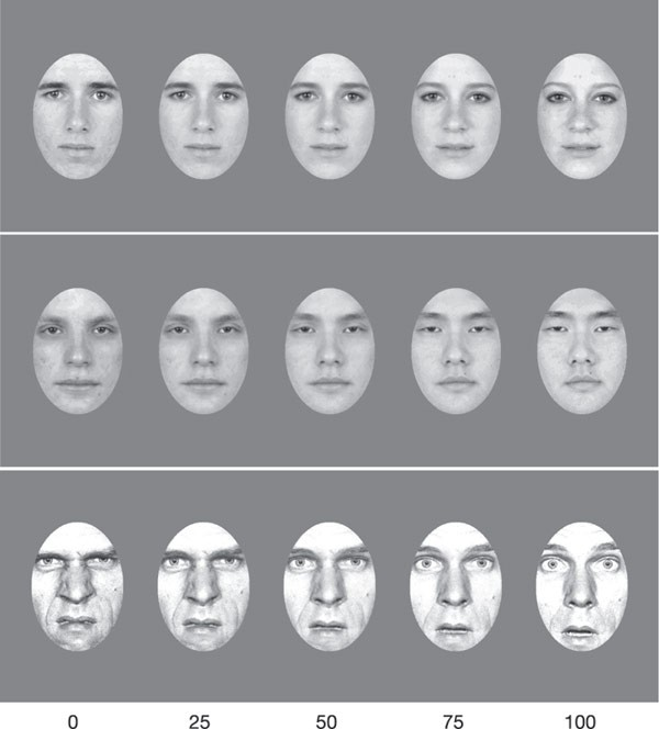 Adaptation to natural facial categories | Nature