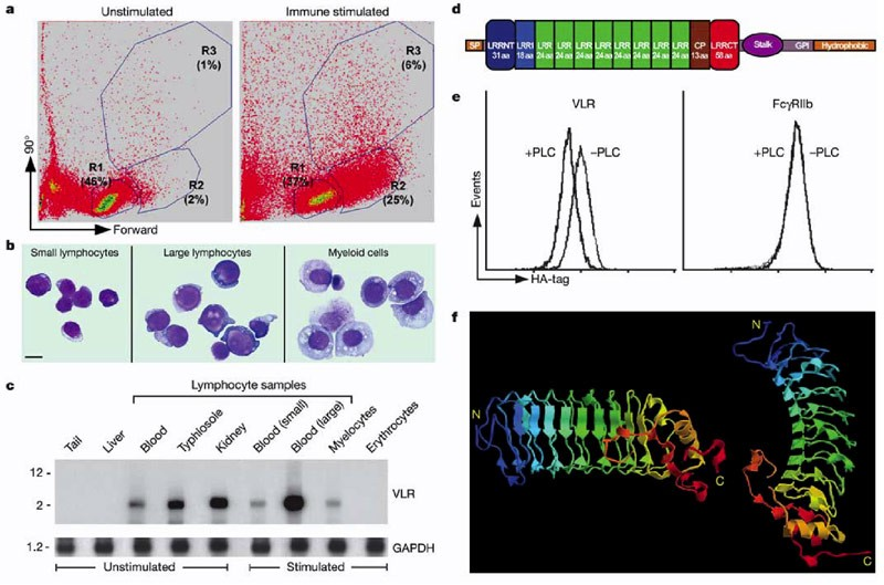 Somatic diversification of variable lymphocyte receptors in the