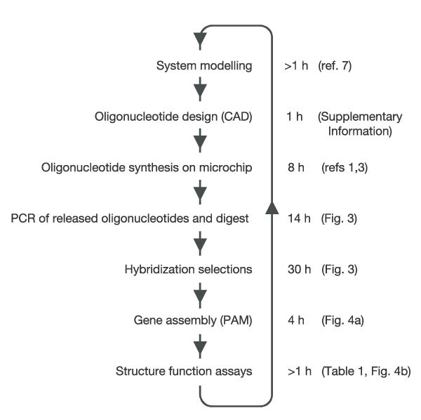 Accurate multiplex gene synthesis from programmable DNA