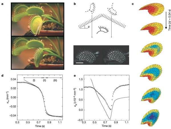 How The Venus Flytrap Snaps Nature