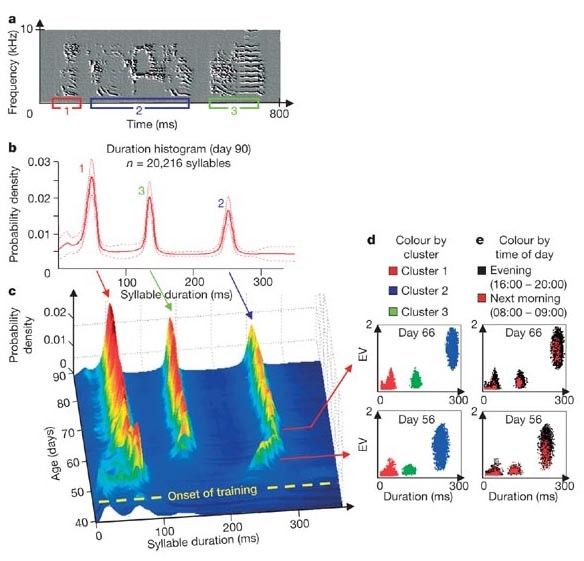 How sleep affects the developmental learning of bird song   Nature