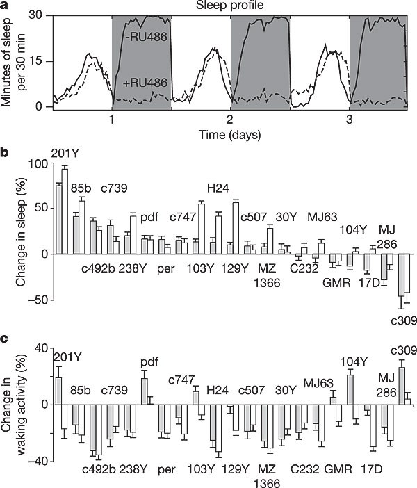 Sleep in Drosophila is regulated by adult mushroom bodies