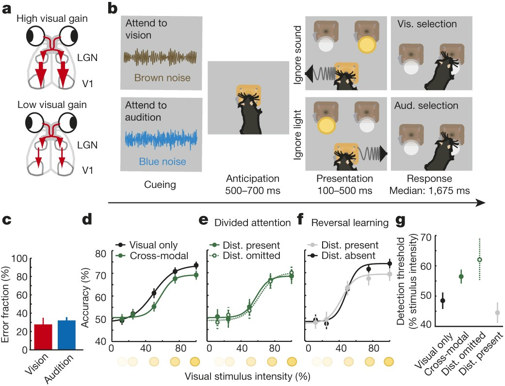 Thalamic control of sensory selection in divided attention ... on wiring symbol for relay, cable for relay, schematic for relay, timer for relay,
