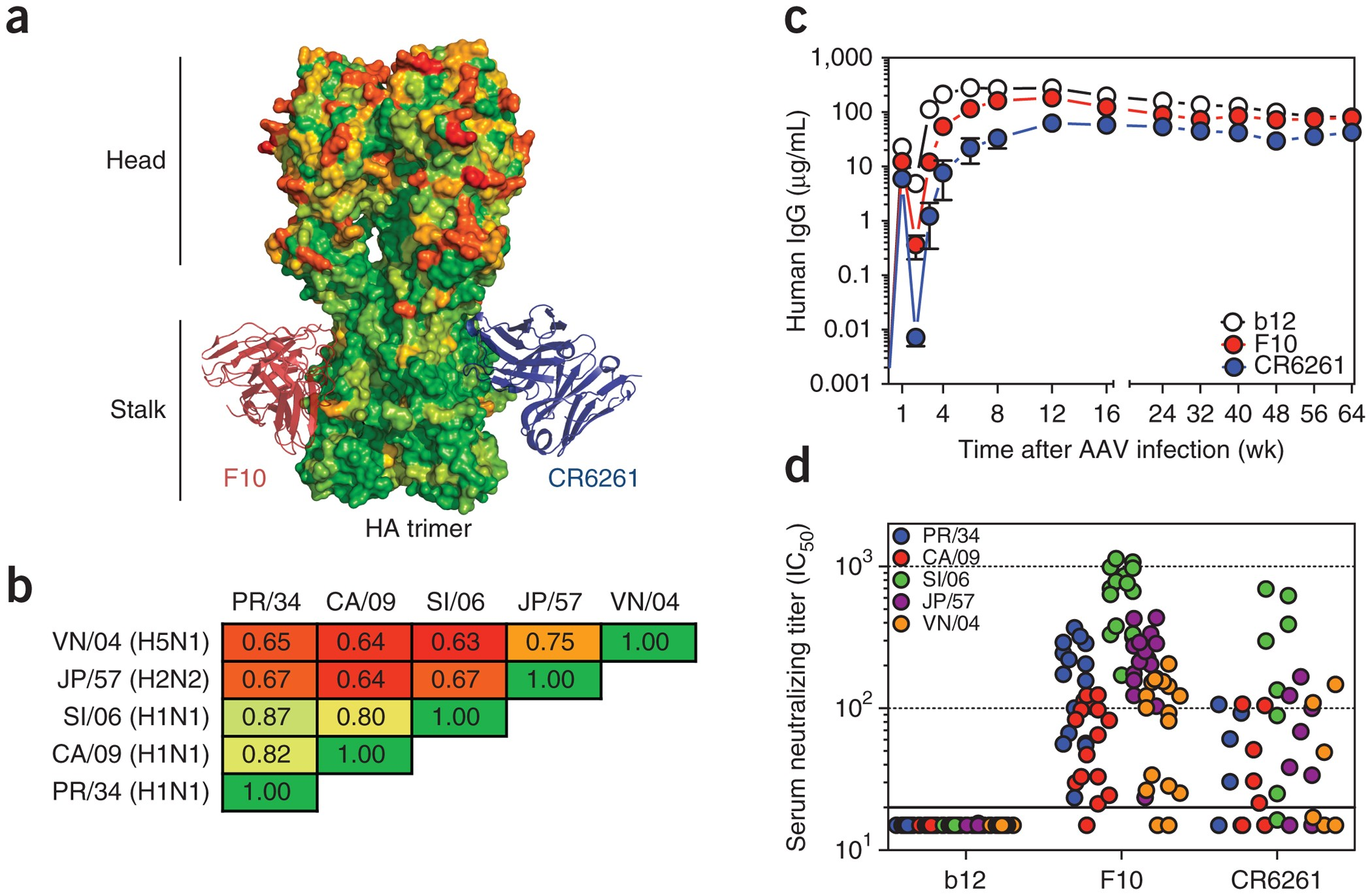 Broad protection against influenza infection by vectored