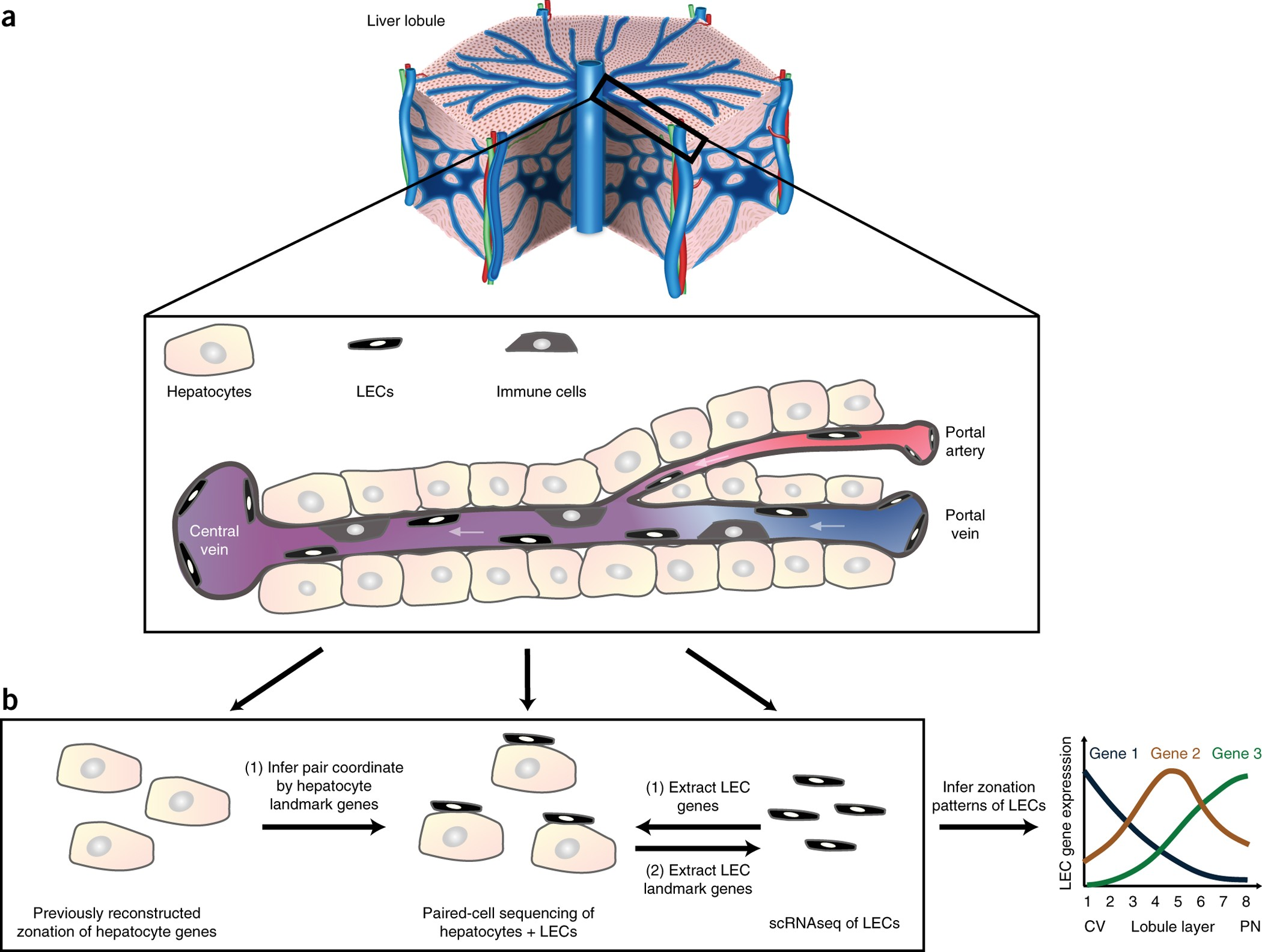 Paired-cell sequencing enables spatial gene expression ...