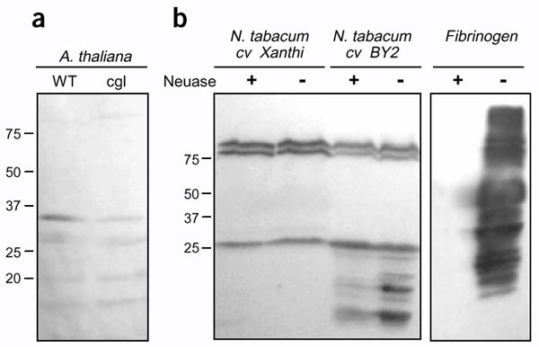 Wondrous Glycoprotein Sialylation In Plants Nature Biotechnology Wiring Digital Resources Inamasemecshebarightsorg
