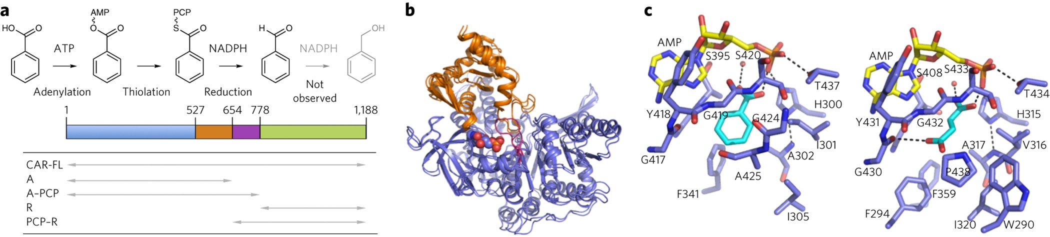 Structures Of Carboxylic Acid Reductase Reveal Domain