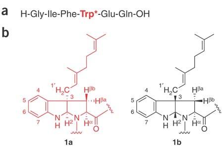 Structure of the Bacillus subtilis quorum-sensing peptide pheromone ... 97cf065a15972