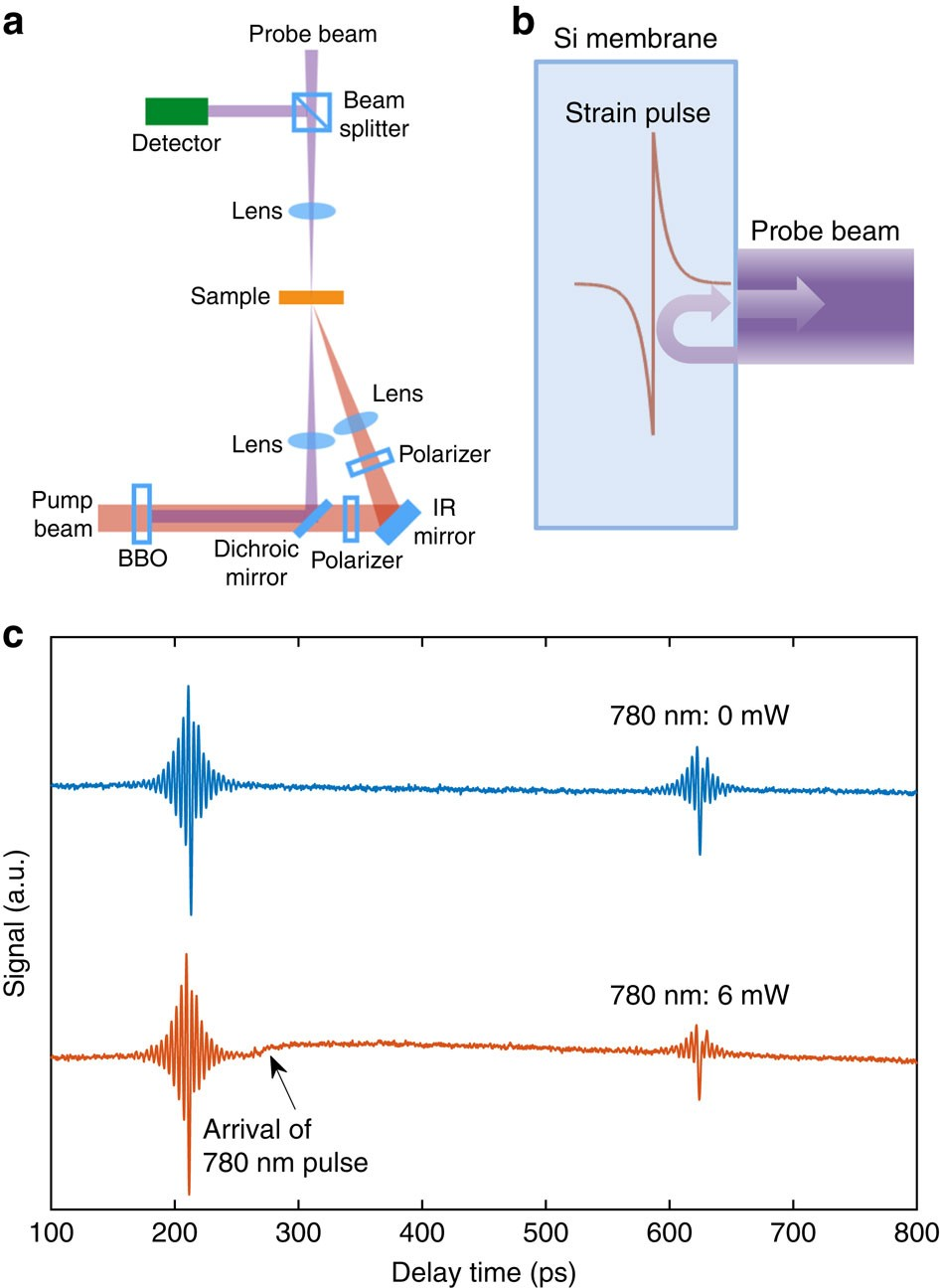 Photo-excited charge carriers suppress sub-terahertz phonon