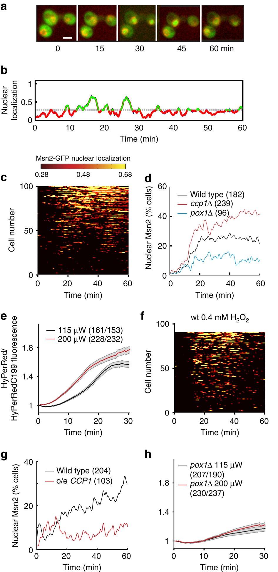 Light Sensing Via Hydrogen Peroxide And A Peroxiredoxin