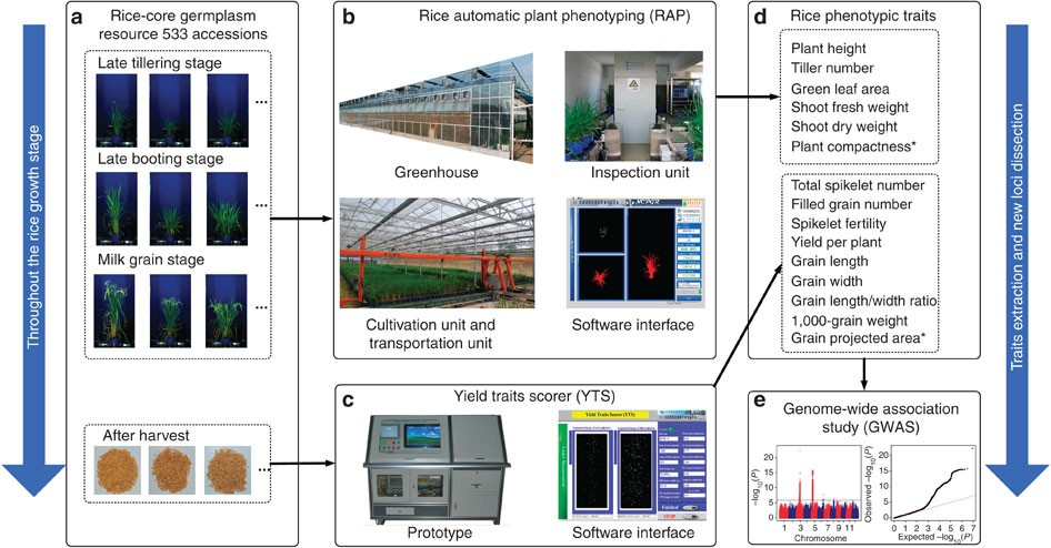 Association High-throughput Combining Genome-wide And Phenotyping
