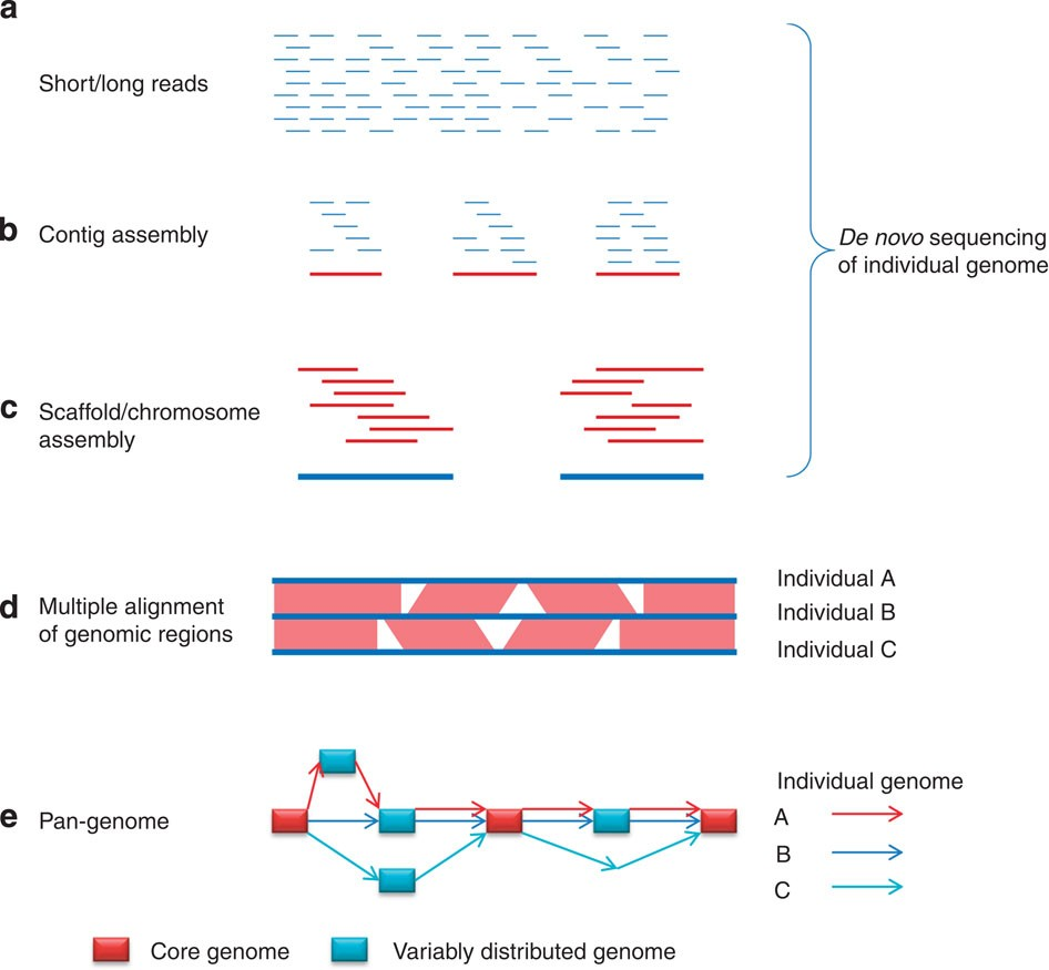 High-resolution genetic mapping of maize pan-genome sequence ... on dna mapping, community mapping, thomas morgan's linkage mapping, cognitive mapping, mental mapping,