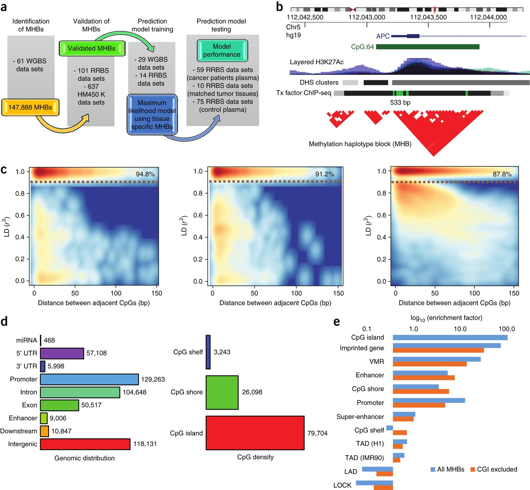 Identification of methylation haplotype blocks aids in ... on