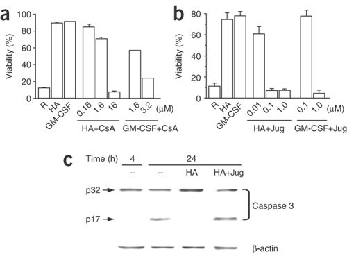 The peptidyl-prolyl isomerase Pin1 regulates the stability