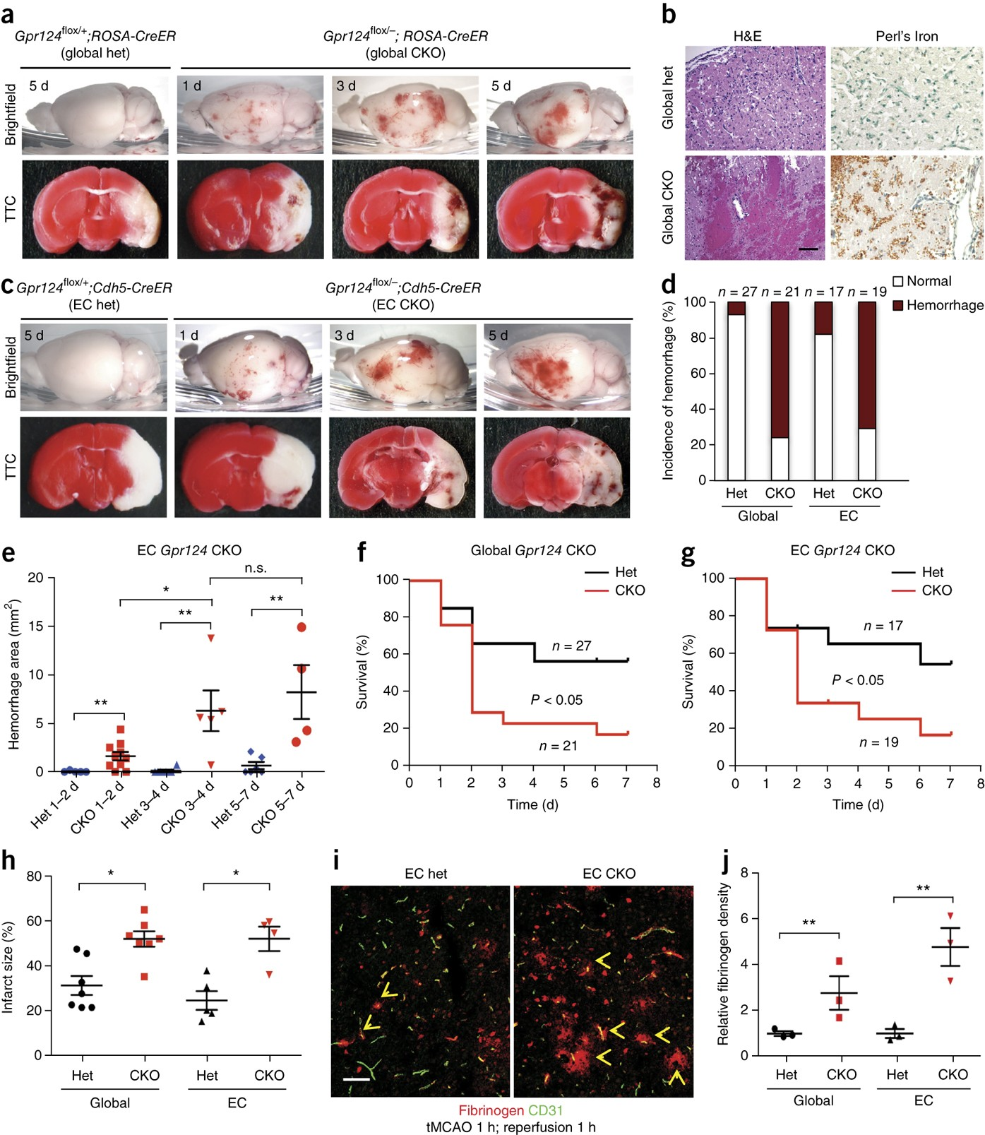 Gpr124 is essential for blood–brain barrier integrity in
