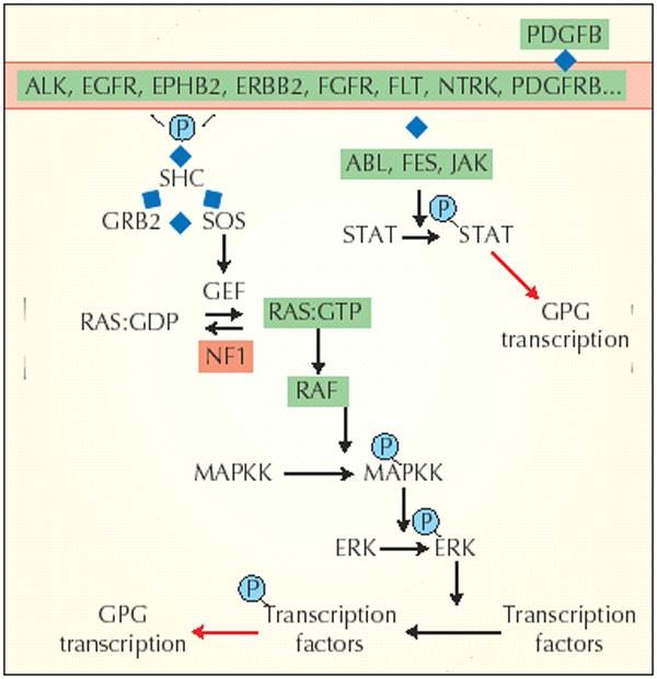 cancer genetic link