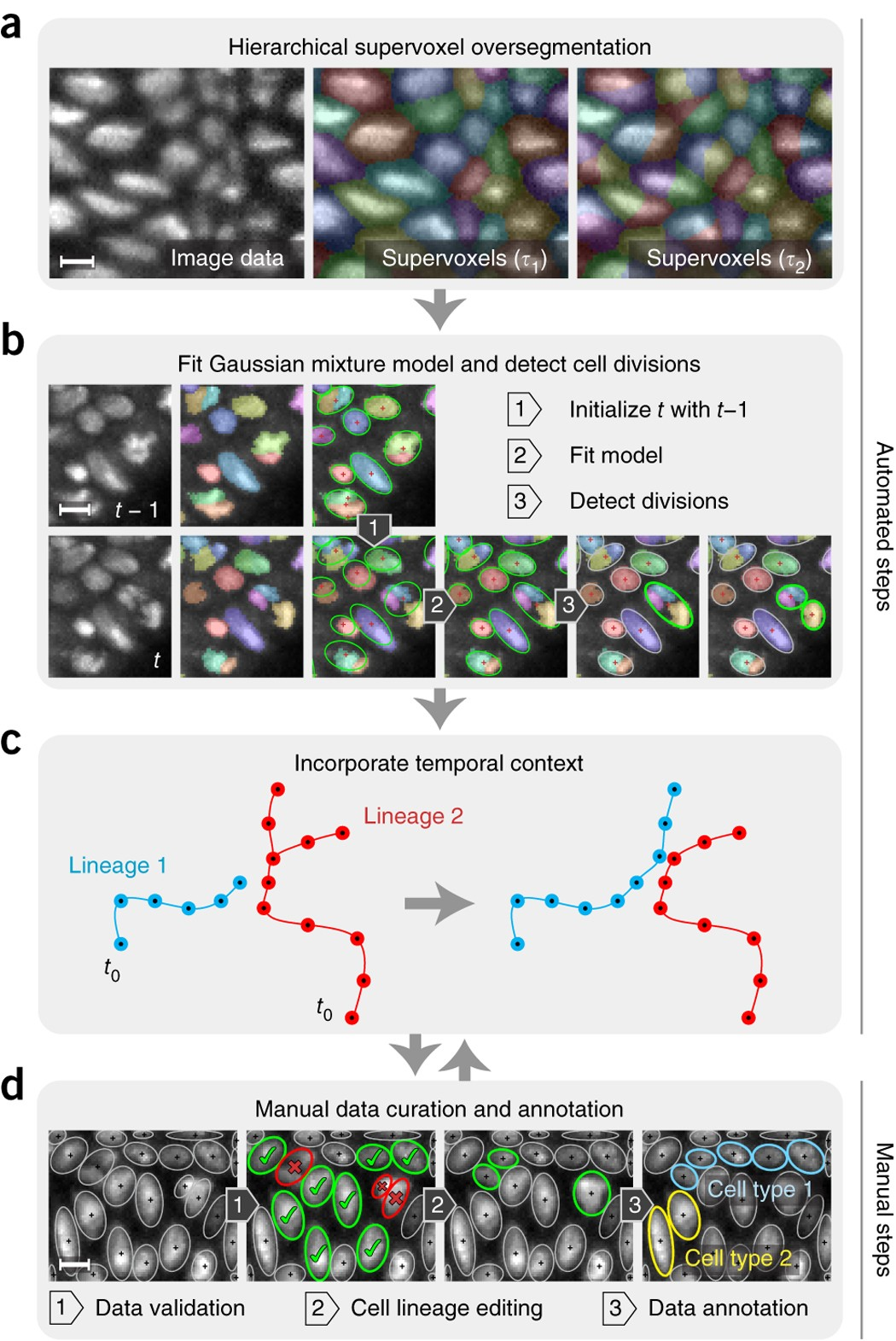 Fast, accurate reconstruction of cell lineages from large