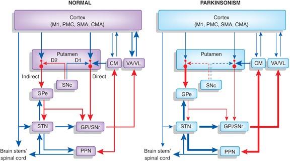 Parkinson's Disease Theutics: New Developments and ... on