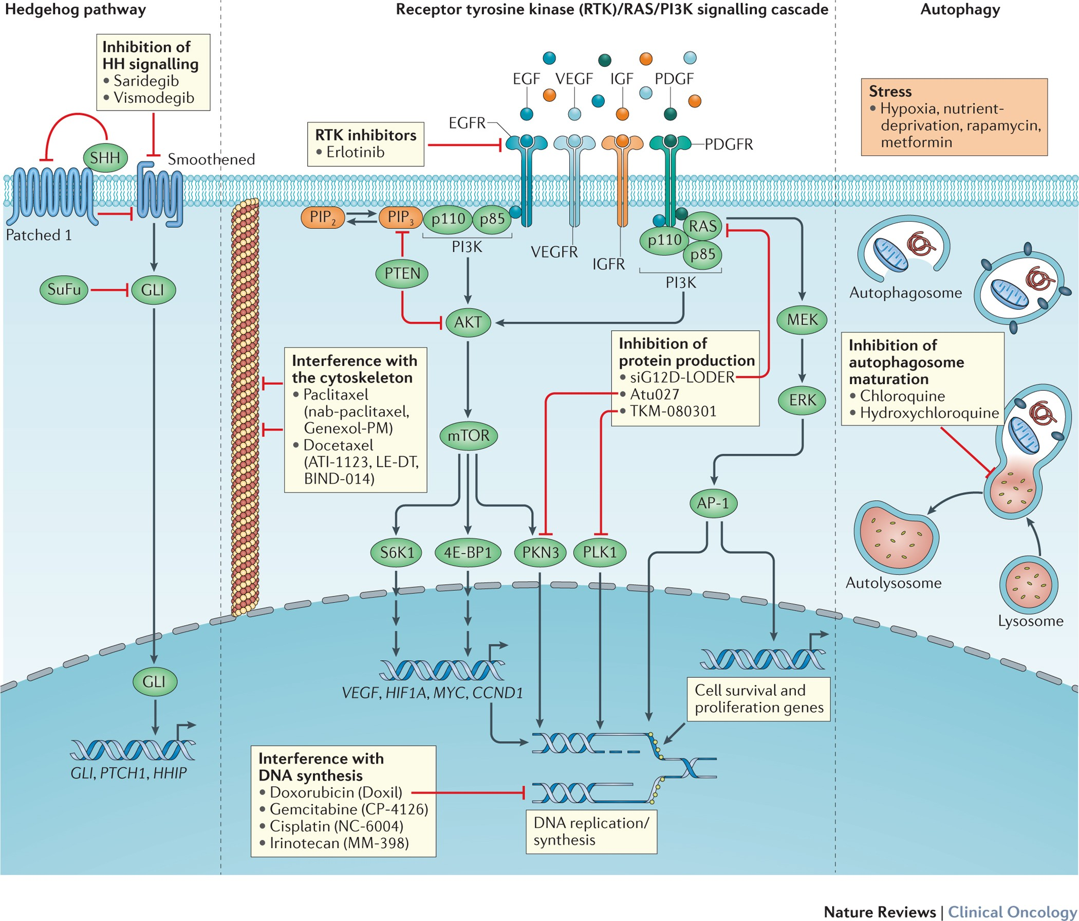 Nanomedicine strategies to overcome the pathophysiological ... on