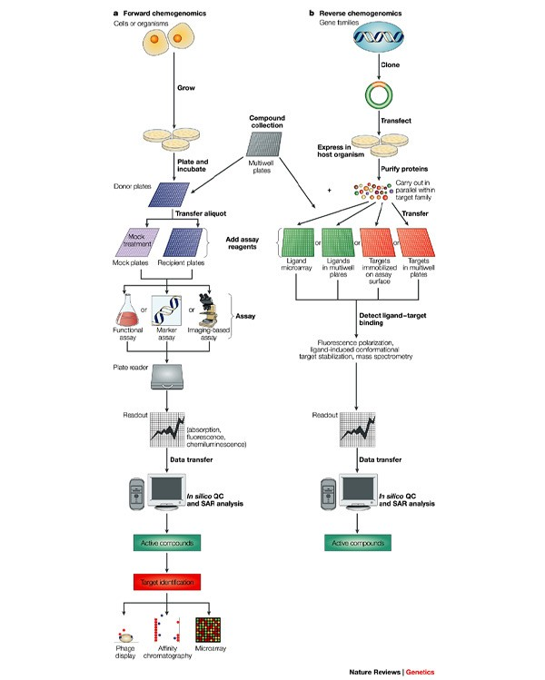 Chemogenomics: an emerging strategy for rapid target and drug
