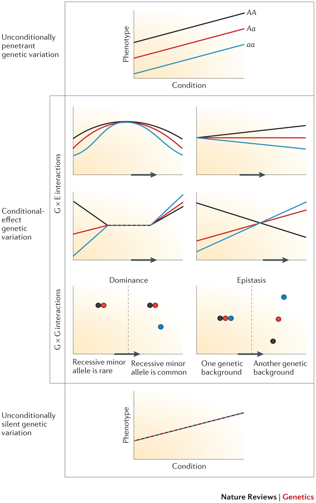 Cryptic Genetic Variation Evolution S Hidden Substrate
