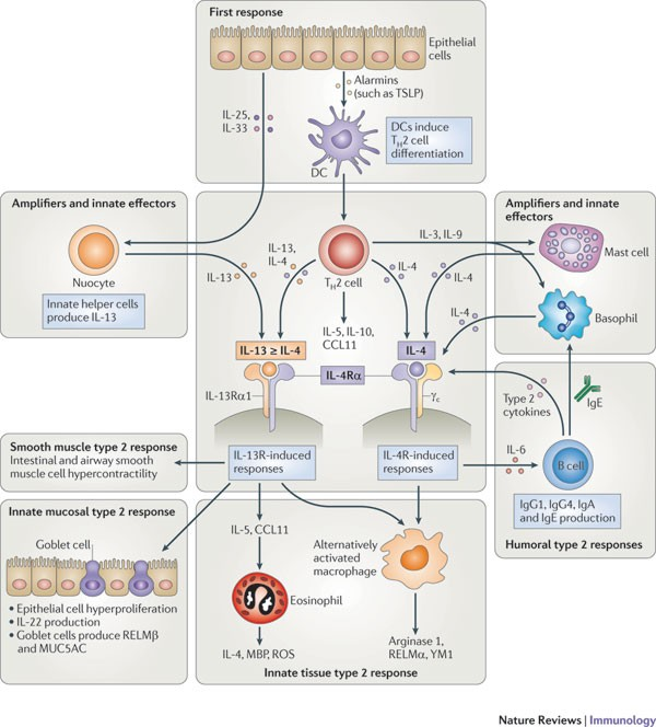 helminth infection nature review)