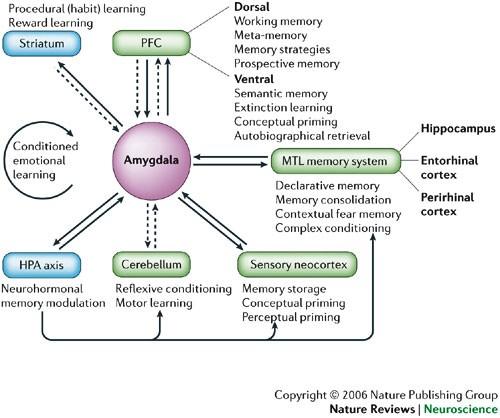 Cognitive neuroscience of emotional memory | Nature Reviews Neuroscience