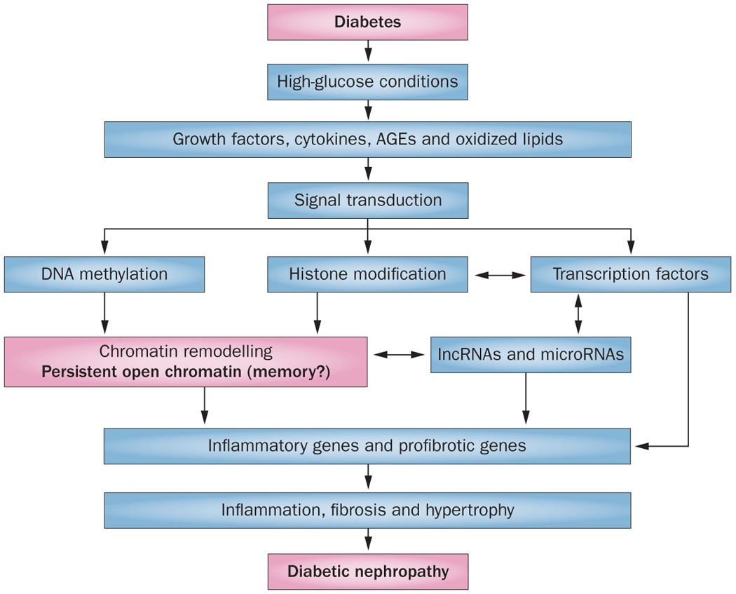 what causes diabetic nephropathy