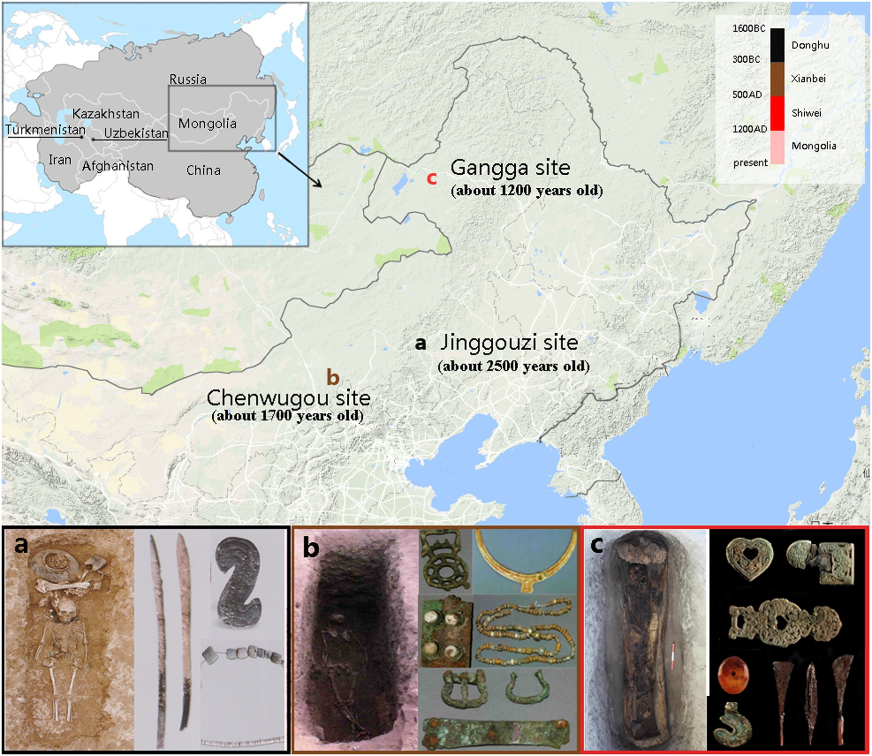 The Y-chromosome haplogroup C3*-F3918, likely attributed to the Mongol