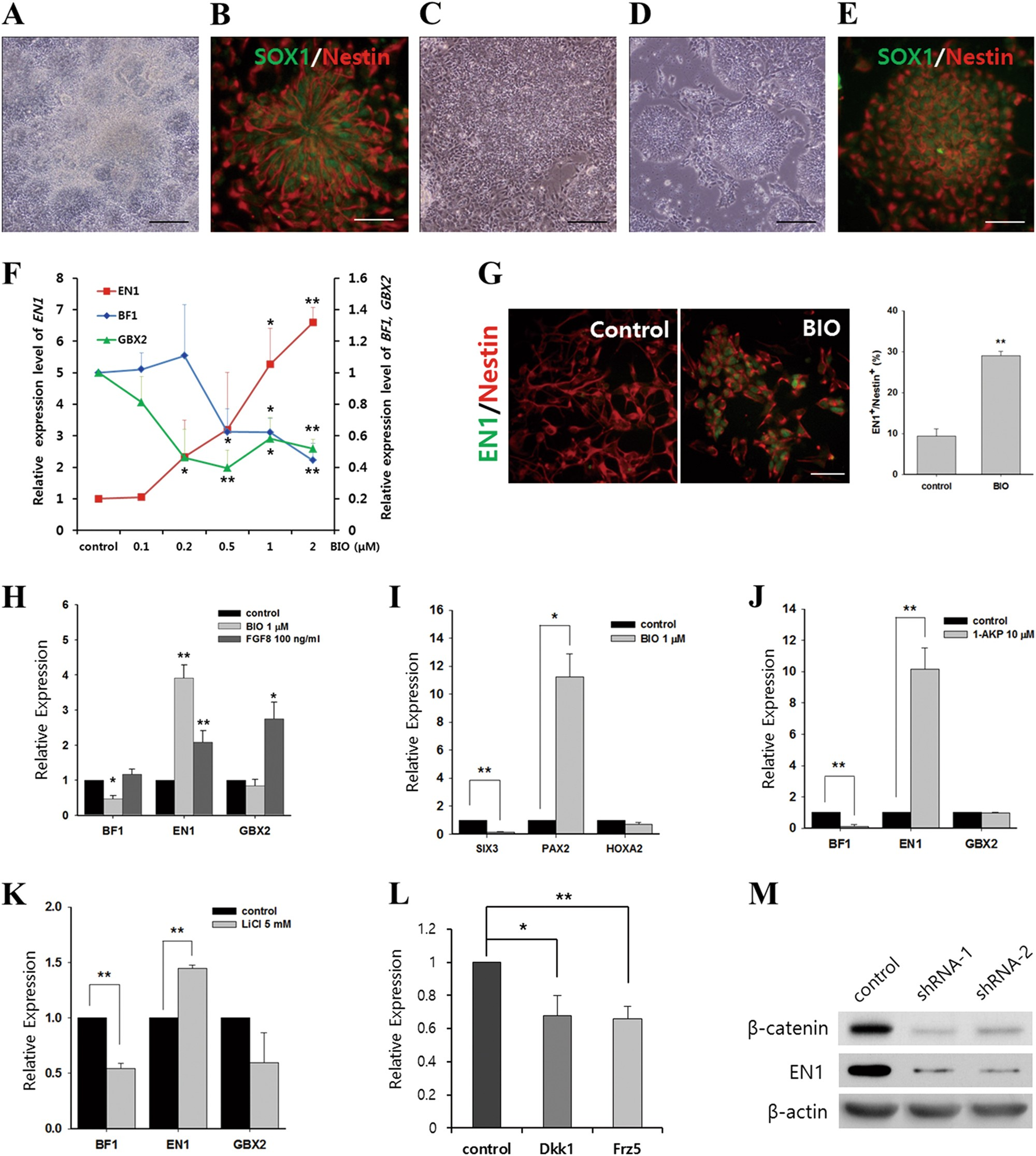 Wnt Signal Activation Induces Midbrain Specification Through Direct Circuits Gt 6 12 Volt Adjustable Power Supply Circuit Schematic Binding Of The Beta Catenin Tcf4 Complex To En1 Promoter In Human Pluripotent Stem