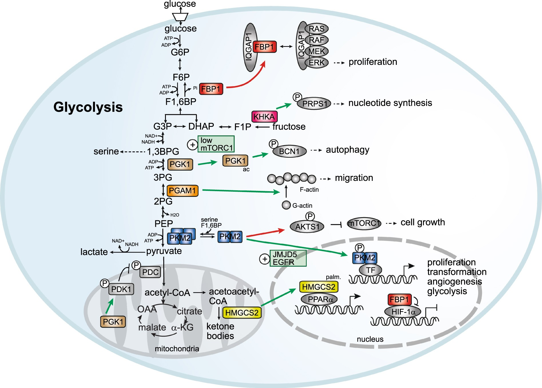 Non Canonical Functions Of Enzymes Facilitate Cross Talk Between Above Is Given Example For 2 Relays Only You Can Supply Either From Cell Metabolic And Regulatory Pathways Experimental Molecular Medicine