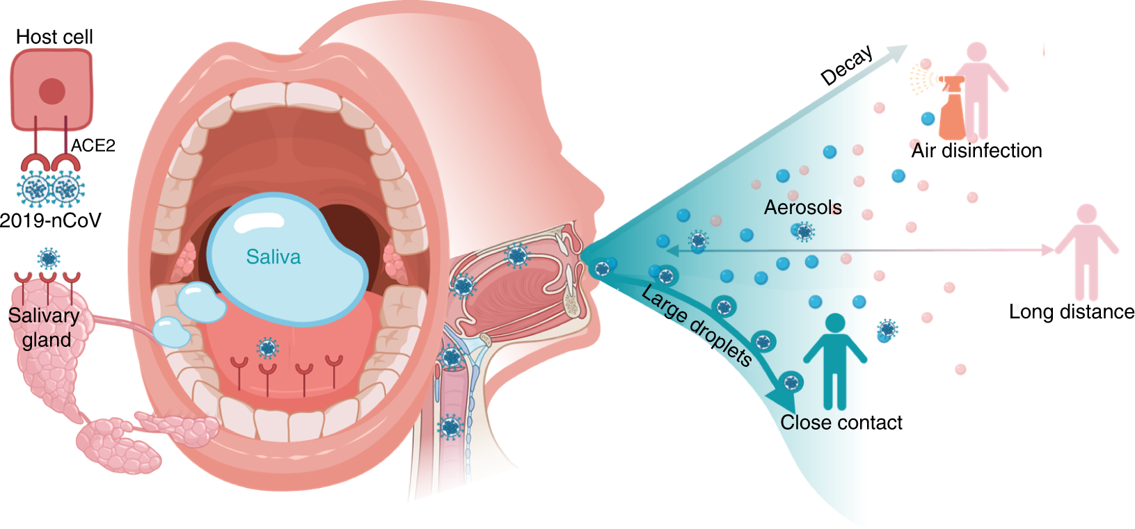Saliva: potential diagnostic value and transmission of 2019-nCoV |  International Journal of Oral Science