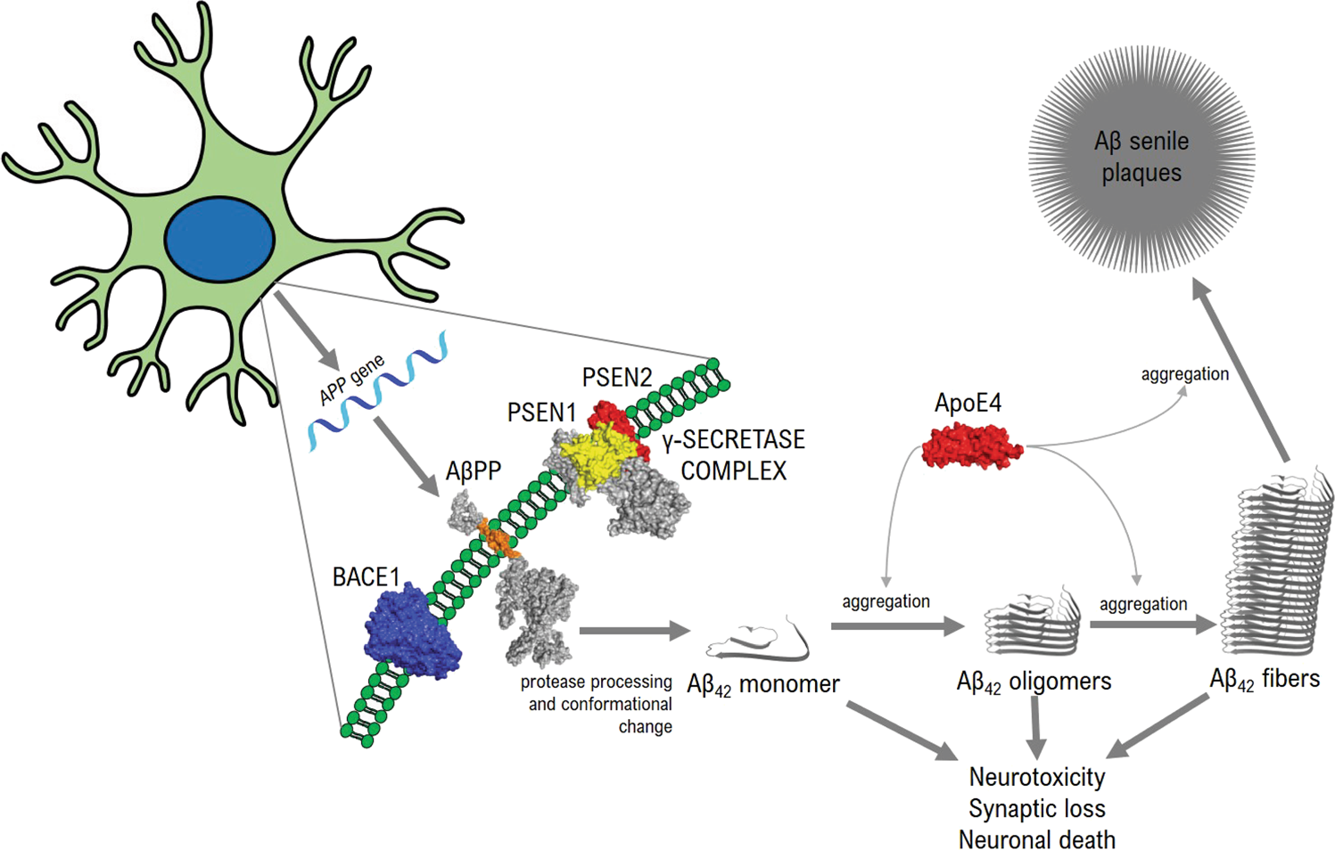 The amyloid cascade and Alzheimer's disease therapeutics: theory