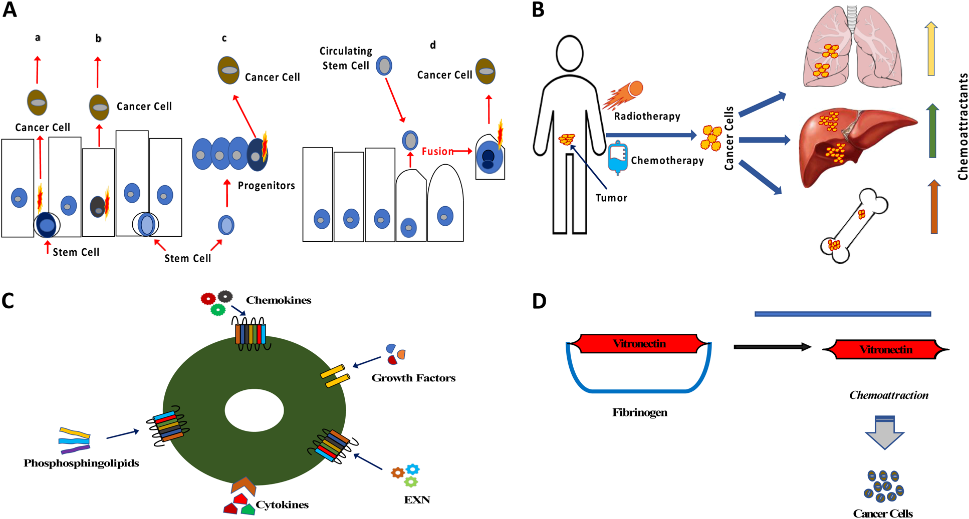Cancer From The Perspective Of Stem Cells And Misappropriated Tissue