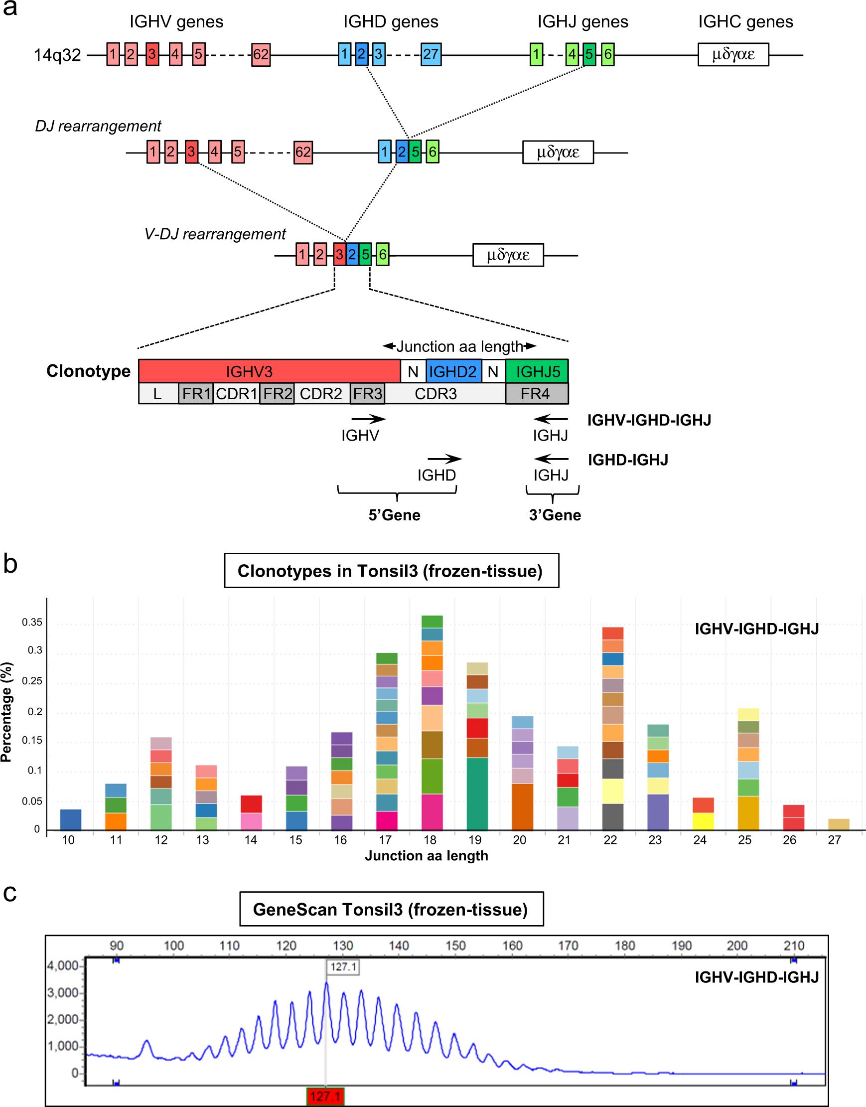 Next-generation sequencing of immunoglobulin gene rearrangements for