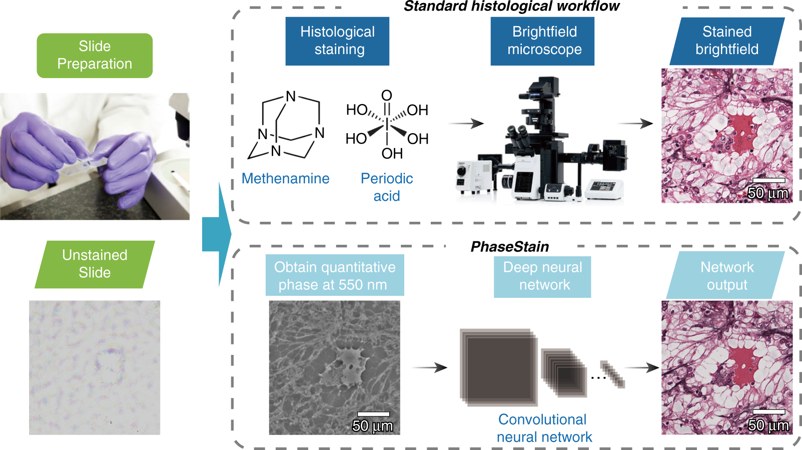 PhaseStain: the digital staining of label-free quantitative phase