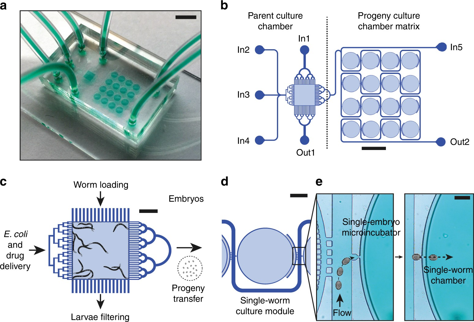 Microfluidics Enabled Phenotyping Of A Whole Population C S Sbr Process Flow Diagram Elegans Worms Over Their Embryonic And Post Development At Single Organism