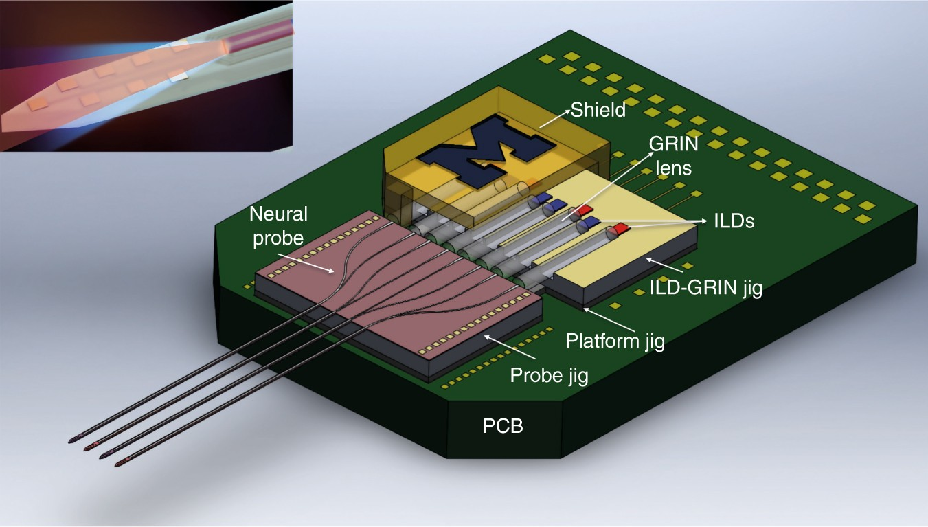 Dual Color Optogenetic Control Of Neural Populations Using Low Noise Perfectly Imperfect Silicon Chips The Electronic Brains That Run Multishank Optoelectrodes Microsystems Nanoengineering
